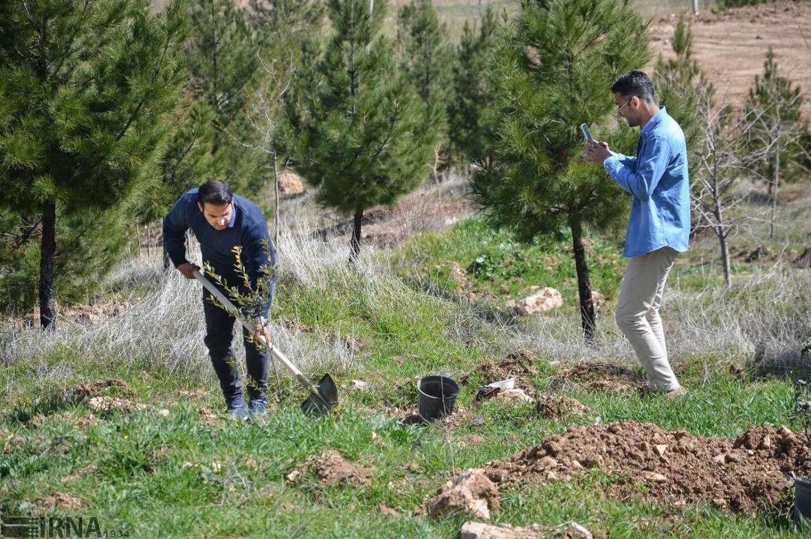 خبرنگاران عملیات کاشت 600 هزار نهال در مازندران آغاز شد