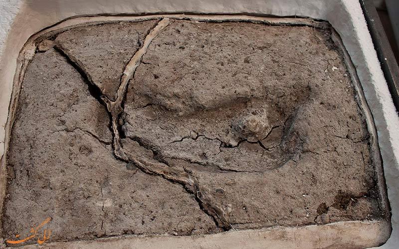 کشف قطعی قدیمی ترین جای پای جهان در شیلی!
